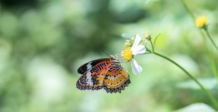 Colorful butterfly parked on the flower stalk. In the sunny morning in the garden royalty free stock images