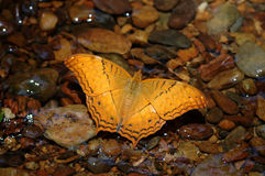 Colorful butterfly. On river background royalty free stock photos