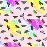 Colorful butterfly with seamless pattern. Stock Photo