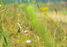 Colorful butterfly sitting on flower in meadow. Colorful butterfly sitting on flower stock photos