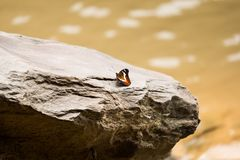 Colorful  butterfly stand alone on silver stone Royalty Free Stock Image