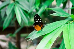 Colorful butterfly standing on a green leaf royalty free stock photos
