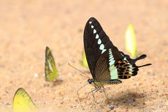 Colorful butterfly is standing on the ground. Stock Photography