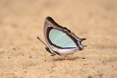 Colorful butterfly is standing on the ground. Royalty Free Stock Images