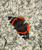 Colorful butterfly on stone Stock Image