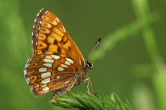 Side view of a colorful butterfly Royalty Free Stock Images
