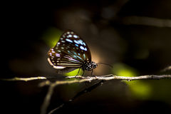 Colorful butterfly on twig Royalty Free Stock Photo
