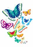 Colorful Butterfly Vector Set Illustration. Colorful butterfly`s set. Vector illustration. This is a colorful butterfly illustration. a butterfly collage depicts royalty free illustration