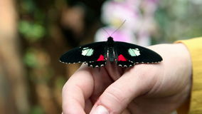Colorful butterfly on womans hand stock video footage