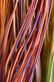 Colorful cable and wires of computer network. Colorful cable and wires of computer and internet network Stock Photography