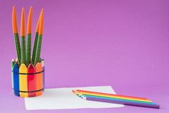 Colorful cactus Sansevieria Velvet Touch, rainbow pencils, working school drawing concept. Ultraviolet background Stock Photography