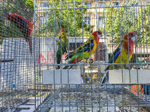 Colorful caged parakeets at bird market in Paris, France Royalty Free Stock Image