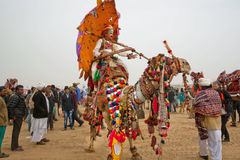 Colorful camel and rider with umbrella walking through the crowd Royalty Free Stock Photos