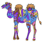 Colorful camel Stock Image