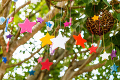 Colorful candle stars on tree Royalty Free Stock Photos