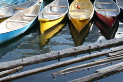 Colorful canoes. And washed wood in a lake Royalty Free Stock Photo