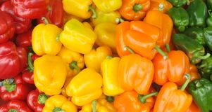 Colorful capsicum at the local market. Red, yellow, orange and green capsicums on sale at the local market Royalty Free Stock Images