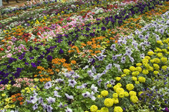 Enchanting Bed of Flowers Royalty Free Stock Images