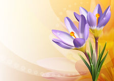Colorful card with crocuses Stock Photography