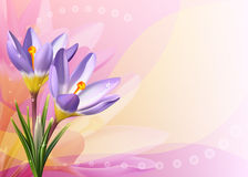 Colorful card with crocuses Royalty Free Stock Images