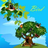 Colorful card with cute birds on the tree Royalty Free Stock Images