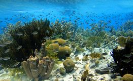 Colorful caribbean reef. A colorful caribbean reef with a great diversity of fish coral and sponges royalty free stock photos