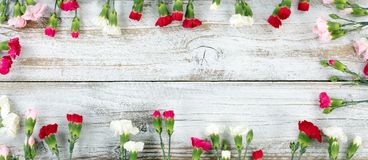 Colorful carnation flower rectangle border on white weathered wo. Colorful carnations forming rectangle shape border on white weathered wooden boards Stock Photography