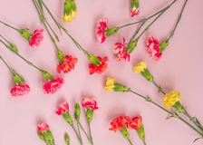 Colorful carnation flowers on light pink background. Flat lay, Top view stock photos
