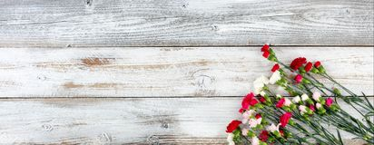 Colorful carnation flowers in lower right corner on white weathe Stock Image