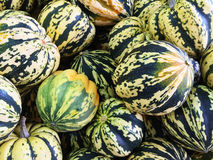 Colorful Carnival squashes Stock Photography