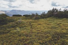 Colorful carpet. Blueberries and cranberries on the trail towards Giumalau Peak Stock Images
