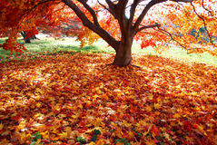 Colorful carpet of fallen leaves Royalty Free Stock Image