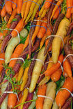 Colorful carrot bunches Stock Photo