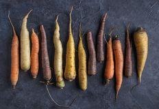 Colorful carrots arrange royalty free stock photo