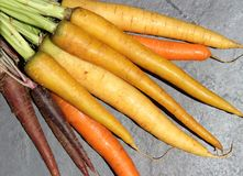 Colorful Carrots. Pack on a black background Stock Images