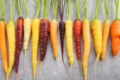 Carrots. Stock Images