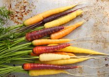 Carrots. Colorful carrots on a gray metal background Stock Photography