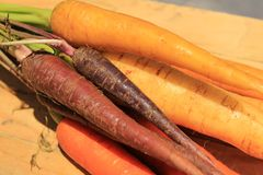 Colorful carrots. Pack orange purple white yellow Royalty Free Stock Images