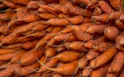 Heirloom carrots. Colorful carrots for sale at market Royalty Free Stock Images