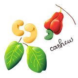 Colorful cartoon cashew Royalty Free Stock Images