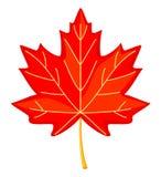 Colorful cartoon red maple leaf vector illustration