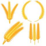 Colorful cartoon ripe wheat ear set royalty free illustration