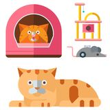 Colorful cat accessory cute vector animal icons pet equipment. Colorful cat accessory and cute vector animal icons collection pet equipment elements food Stock Photos