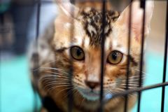 Cat in the cage stock photography