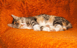 Colorful cat laying on the bed Stock Image