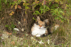 Colorful cat lying in rural bush Royalty Free Stock Photos