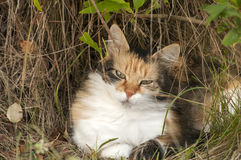 Colorful cat lying in rural bush Stock Images