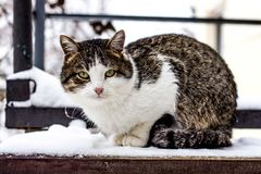 Colorful cat sitting on the step in winter stock photography