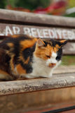 Colorful cat sleeps on bench. Picture of colorful cat sleeping on bench in city Stock Photography