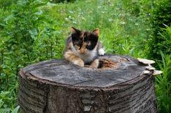 Colorful cat stump. Colorful cat stump of cut tree. Beautiful vegetation Royalty Free Stock Photos